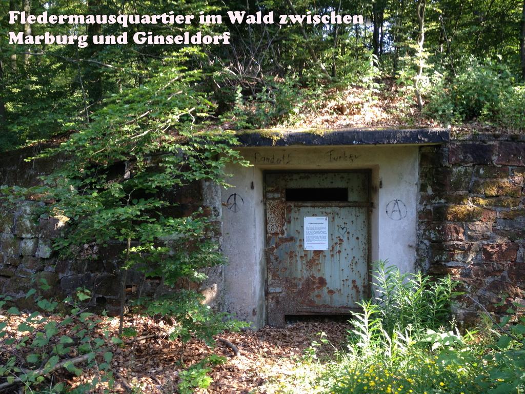 Fledermausquartier in einem alten Munitionsbunker